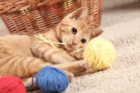 Kitten playing with wool balls - Image courtesy by: homecarpet1.com